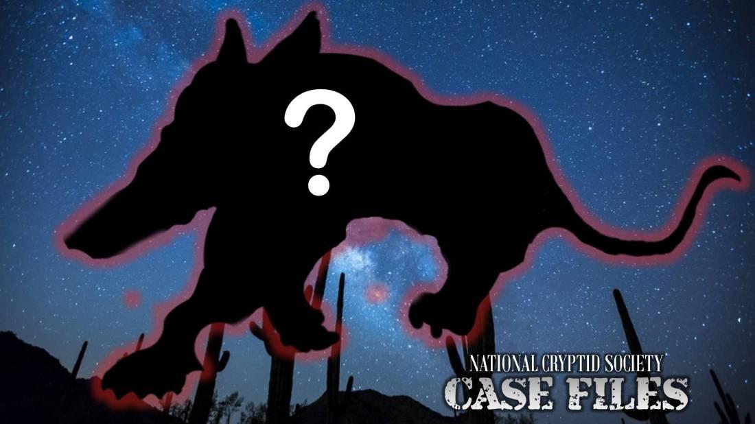 NCS Case File 13