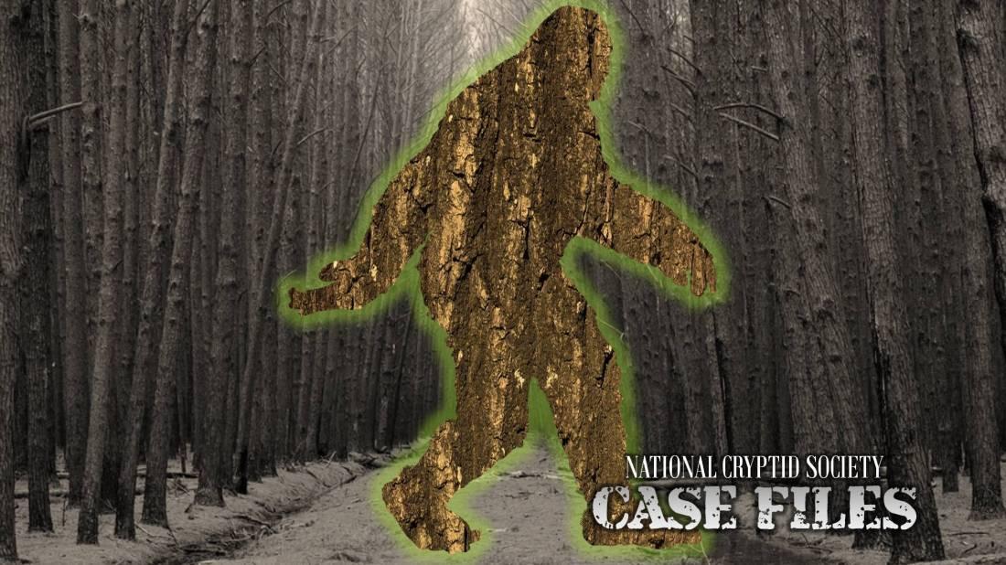 NCS Case File 19