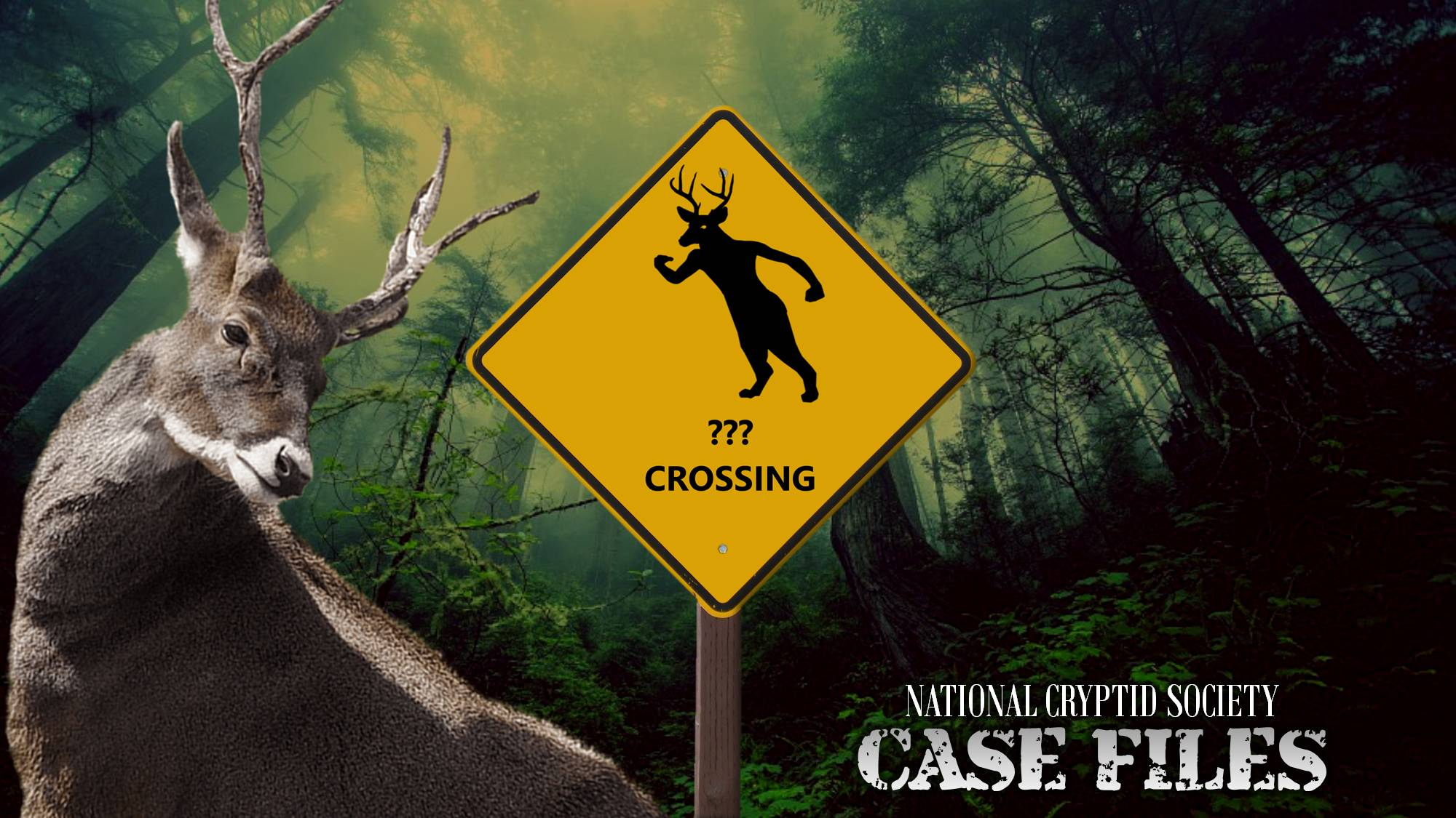 NCS Case File 9