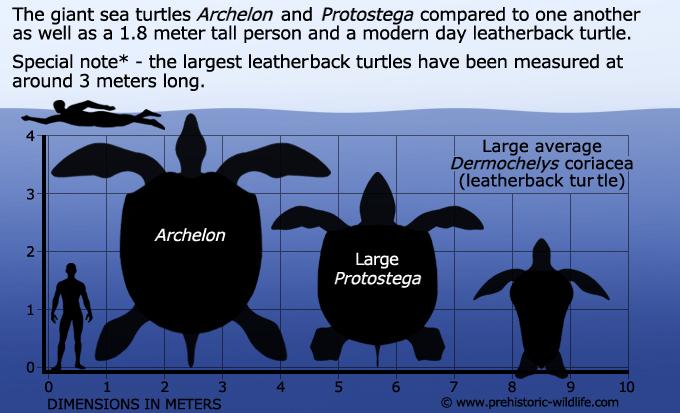 archelon-protostega-size
