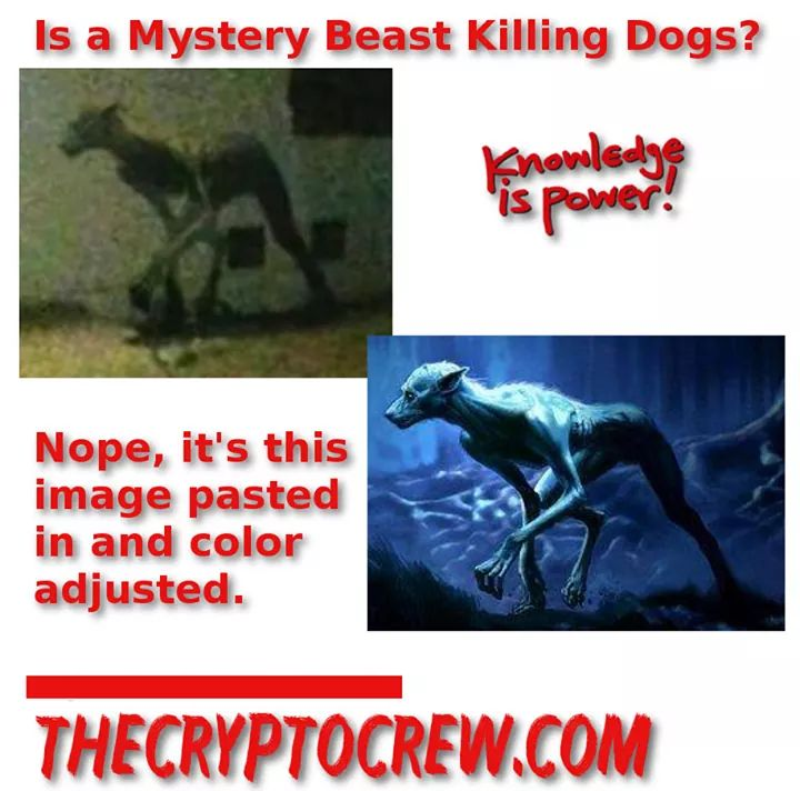 """Is it Real or the Werewolf from """"Harry Potter?"""" Alleged"""